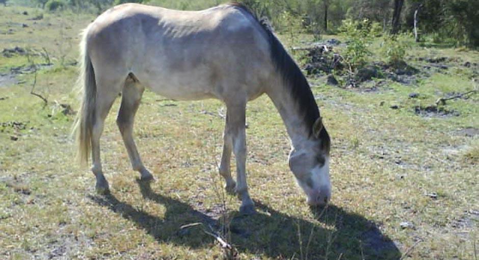 caballo_entrerriano.jpg